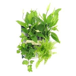 Poche plantée Miami pour cadre végétal 4 plantes 114525
