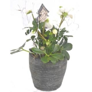 Rose de Noël pot noir et cuivre. Le pot 116362