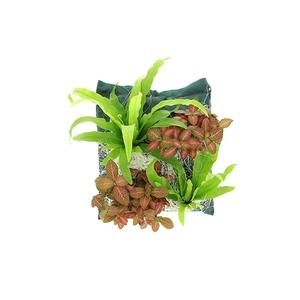 Poche plantée Colorado pour cadre végétal 4 plantes 128797
