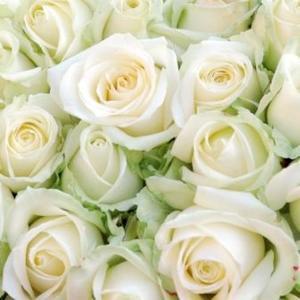 Serviettes x20 3 plis 33x33 cm White roses 130387