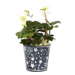 Rose de Noël pot zinc étoile. Le pot 135879