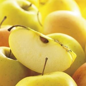 Pommier Tentation® forme palmette US 155314