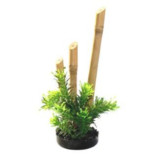 Bambou plante s oir 157871