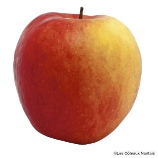 Pomme Crimson Cripps - Prix au kg 163930