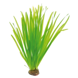 Vallisneria spiralis de 100 cm maximum 168300