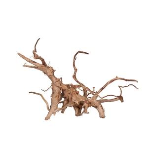 Racine Vigne rare rouge, Entre 40 et 80 cm 174937