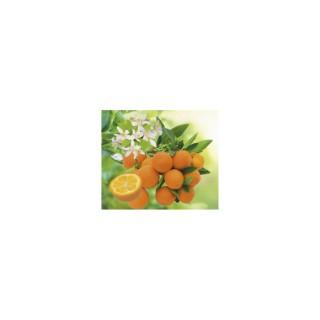 Kumquat Rond bio. Le pot de 3 litres 199327