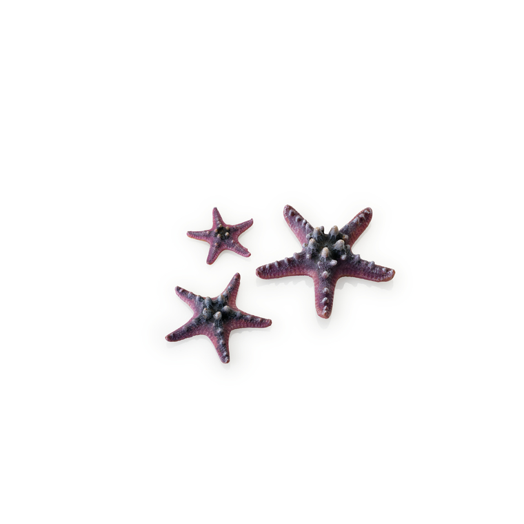 Décoration aquarium étoile de mer set de 3 biOrb 108825