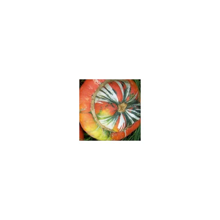 Courge Giraumon Turban. Le pot de 10,5 cm 113532