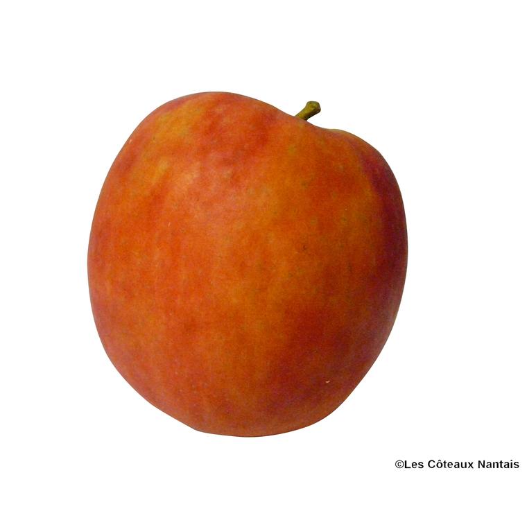 Pomme Cripps Pink - Prix au kg