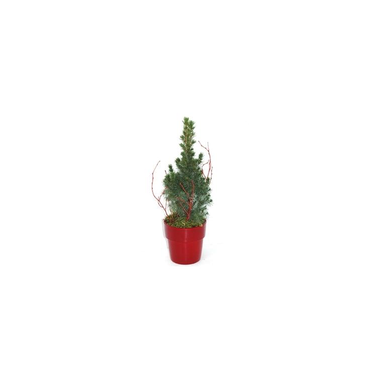 Picea Glauca Conica. Le pot déco 115874