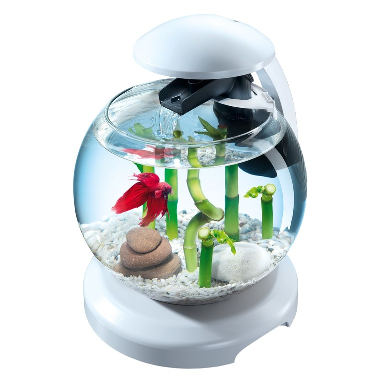 Aquarium Tetra cascade globe Blanche