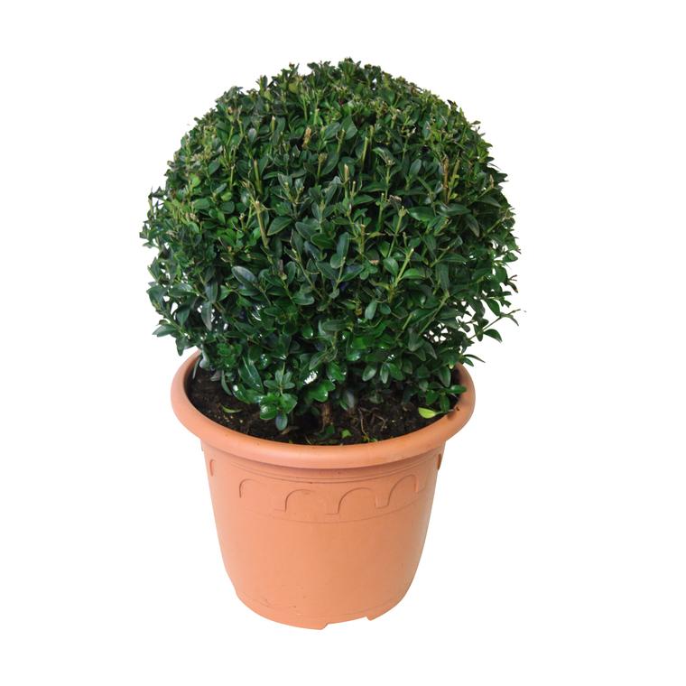 botanic®