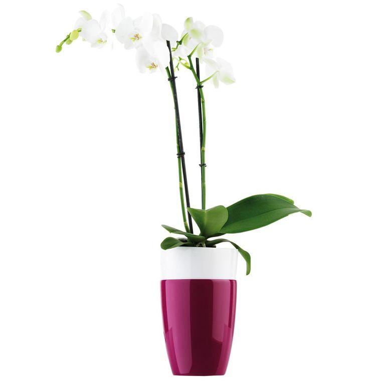 Cache pot 12.5cm Brussel Orchidées Haut Diamond Elho D.12,7 x H.15,2cm