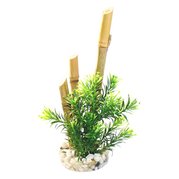Bambou plantes 157868