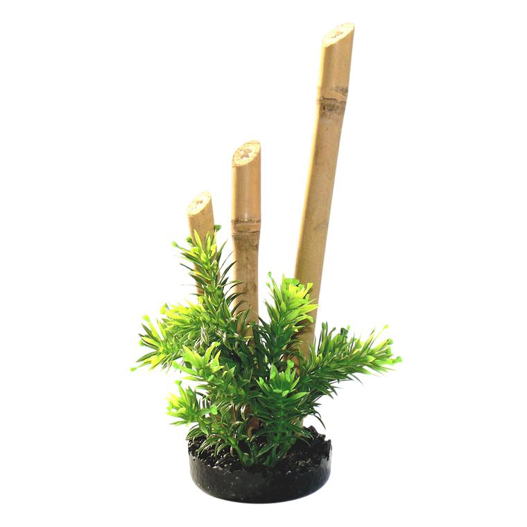 Bambou plante s oir