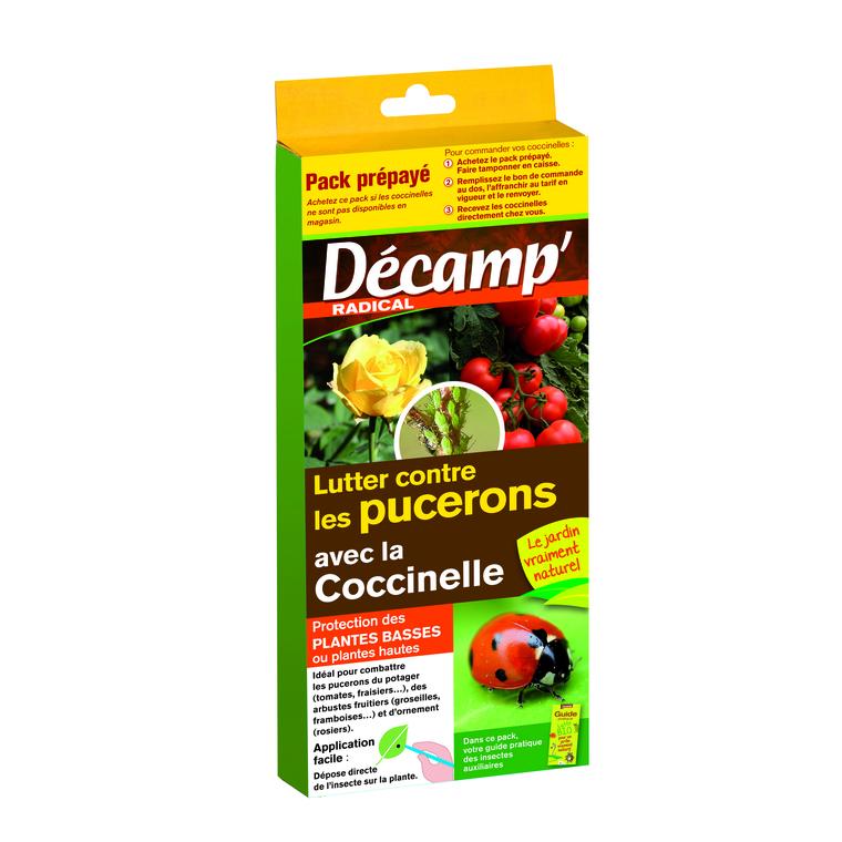 Coccinelles Septempunctata carnet 160340