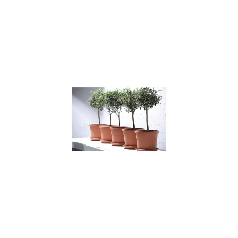 Pot 35cm Algarve Cilindre Elho coloris terre cuite 165165
