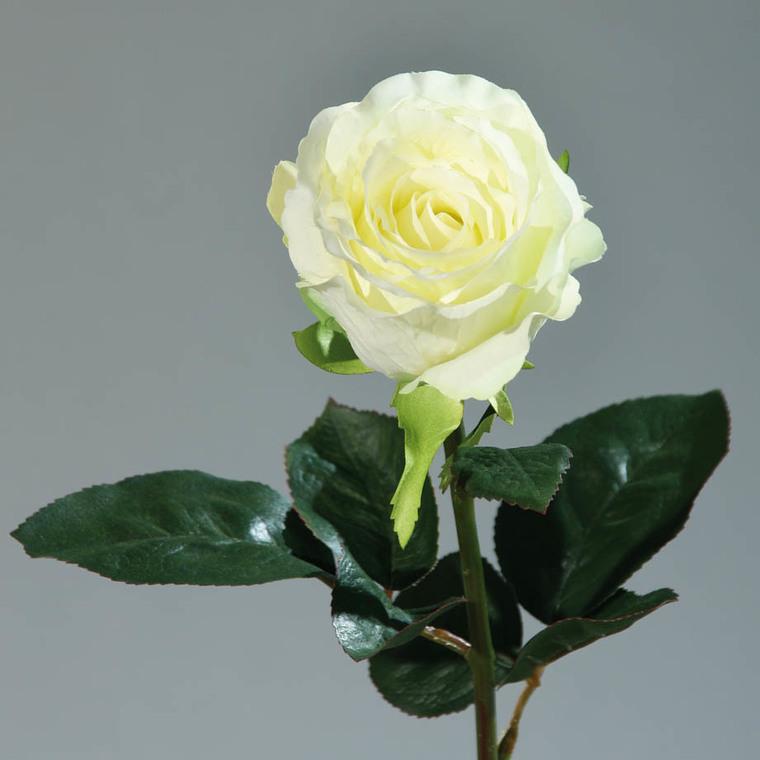 Rose Equateur artificielle crème 169077