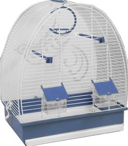 Cage oiseaux Papua 1