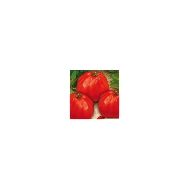 Tomate Coeur de Boeuf Corazon - Prix au kg 175075