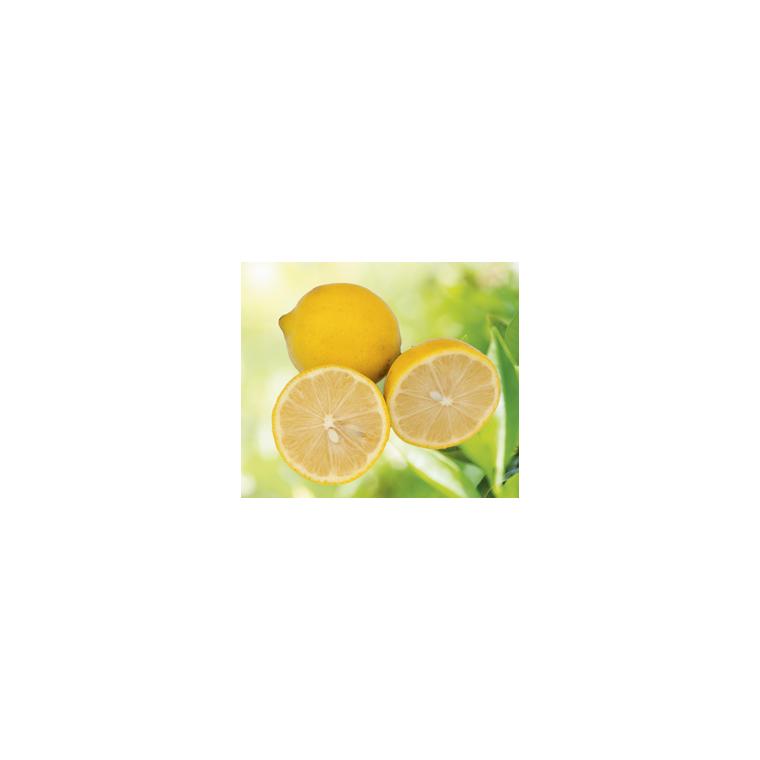 Lime Douce de Palestine en pot de 3 L Bio 199332