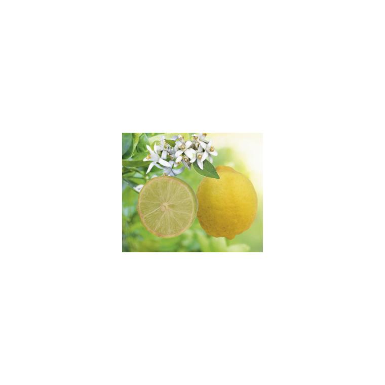 Lime Mexicaine en pot de 3 L Bio 199333