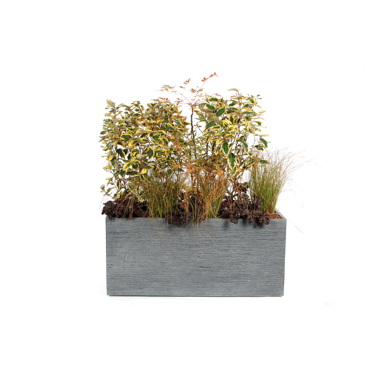 r cup rateur d 39 eau botanic. Black Bedroom Furniture Sets. Home Design Ideas