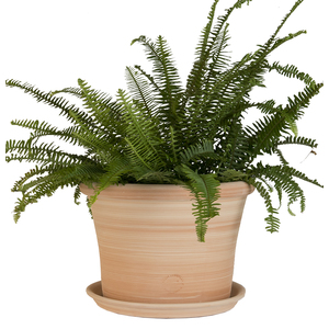 Pot rond Cocio Lisio en terre cuite claire - D40x H29 203452