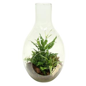 Composition de plantes vertes 207375