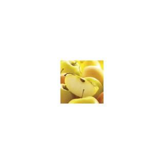 Pommier Tentation® forme palmette UD 222021