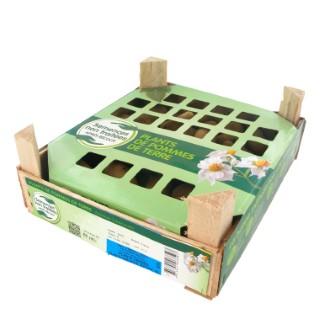 Pommes de terre Spunta calibre 28/35, 60 plants 228913