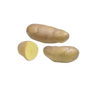 Pommes de terre BF 15 calibre 25/32, 1,5 kg 228924