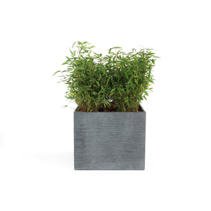 Pot carré bas Stream coloris anthracite 55x55x46 cm 230304