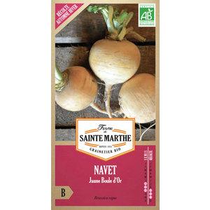 Navet Jaune Boule d'Or 232615