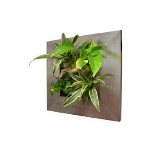 cadre v g tal s rouge 31x31 cm avec 4 plantes plantes et fleurs d 39 int rieur nos produits botanic. Black Bedroom Furniture Sets. Home Design Ideas