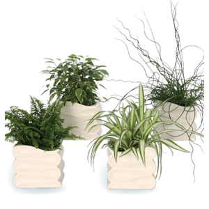 plante verte avec cache pot plantes vertes maison botanic. Black Bedroom Furniture Sets. Home Design Ideas