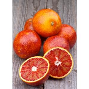 Orange sanguine Tarocco bio d'Italie - Prix au kg 242570