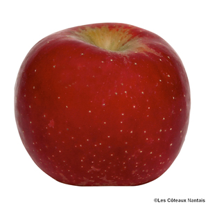 Pomme Ariane bio - Prix au kg 242843