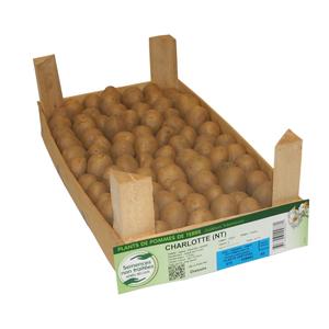 60 plants germés dressés de pommes de terre charlotte calibre 25 à 32 245693