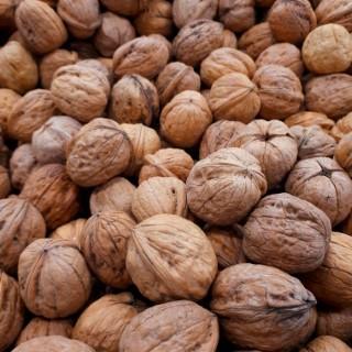 Noyer à fruits Lauzeronne de semis Tige en conteneur 255720