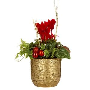 Mini Cyclamen + lierre pot or. Le pot 256025