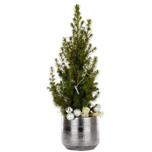 Picea Conica pot gris + guirlande LED. Le pot 256041