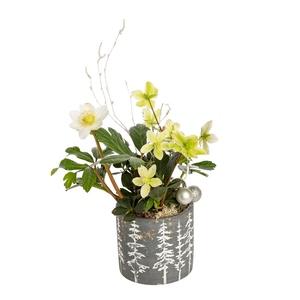 Hellébore ou rose de Noël en pot déco gris argent 257877