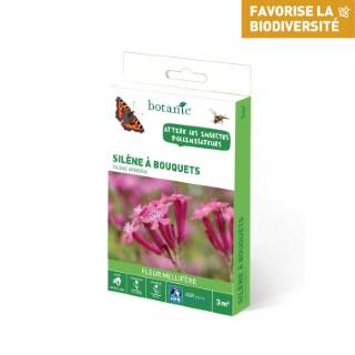 Silene à bouquets 260160