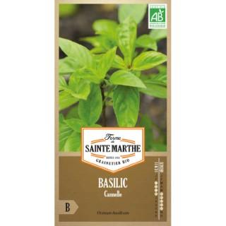 Basilic Cannelle 260649