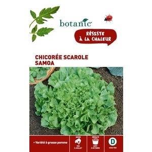 Chicoree scarole samoa Caillard 261139