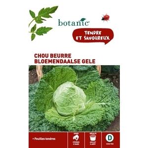 Chou beurre Bloemendaalse Gele  261142