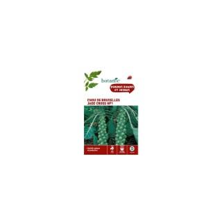 Chou de bruxelles jade cross hf1  261146