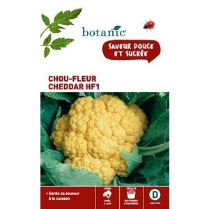 Chou-fleur cheddar hyb.f1 x2 sachets 261151